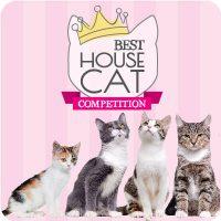 best-housecat-2018